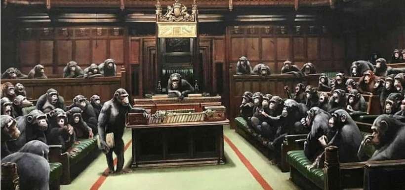 Bansky Camara Comunes chimpances